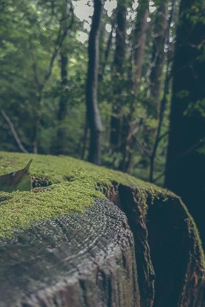 Stubbe med vacker mossa.