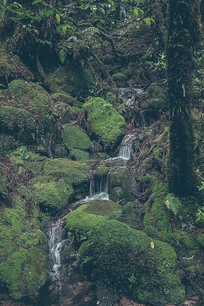 Mossa, stenar och vattenfall.